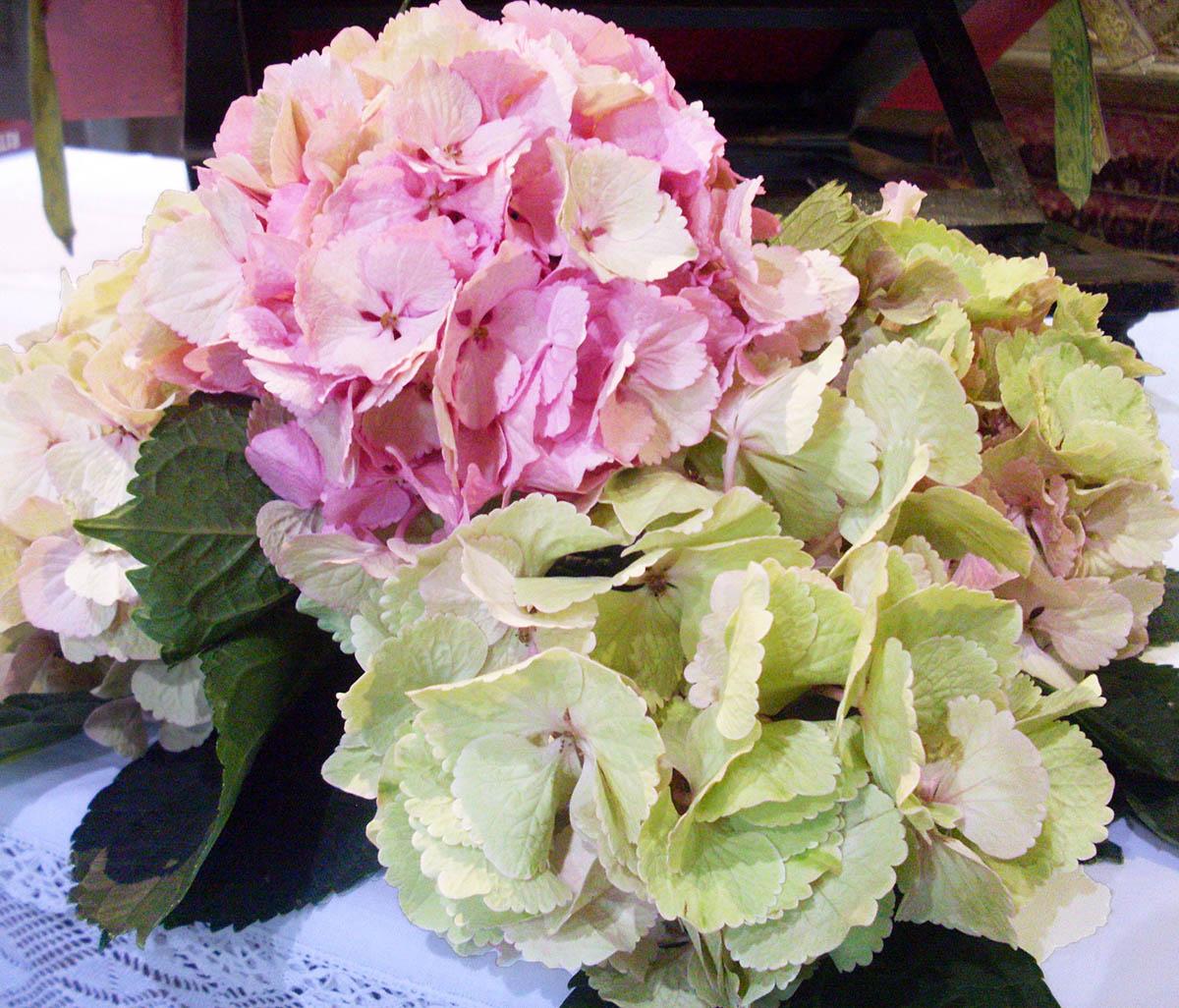 Ortensie Rosa Matrimonio : Rosa fiori sala