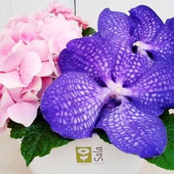 ortensie rosa orchidee viola